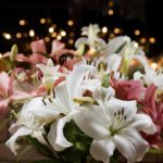 lilies for Christmas, lilies in bloom, Guy Sagi, Raeford, North Carolina, Hoke County